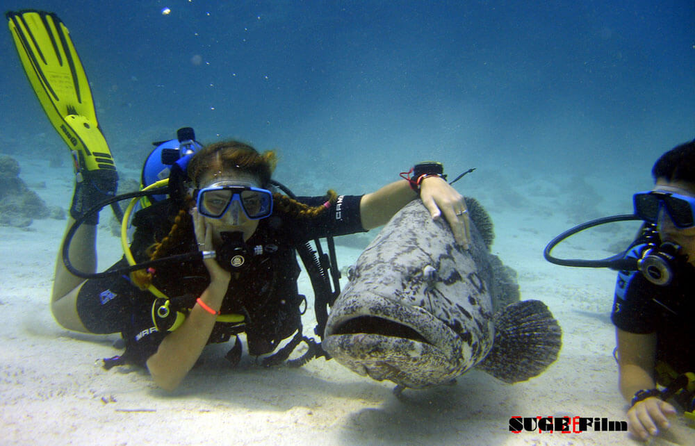 Scuba Diving in Australia - Cairns with Goliath Grouper