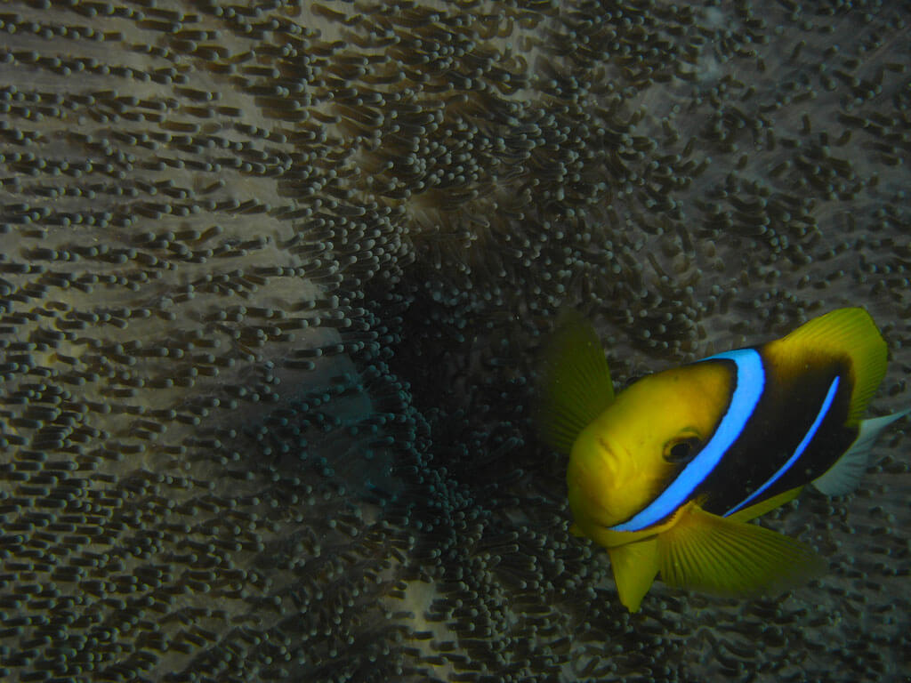 Tauchurlaub in Yap